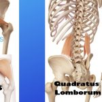 A Low Back Pain Solution